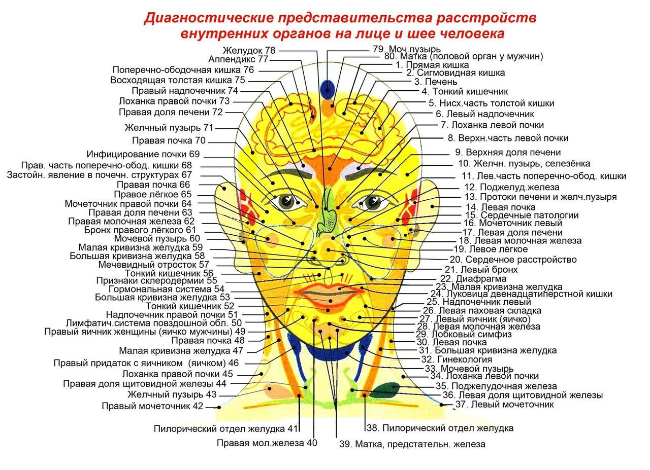 Проекционные зоны на теле человека