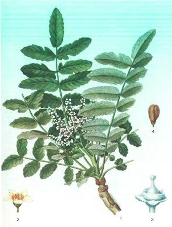 Травы и Ладаны - Автор неизвестен
